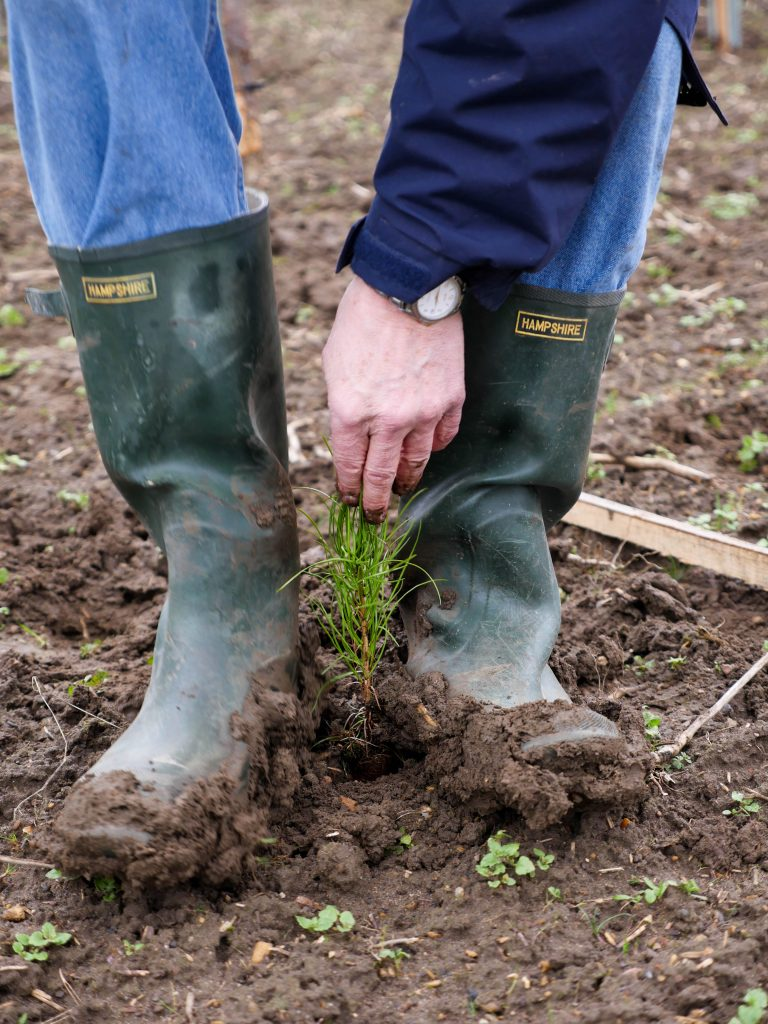 A business sponsor helps plant another tree. Photo Rokesmith.